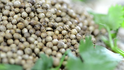 Coriander Seeds (loopable HD video)