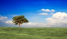 """Постер, картина, фотообои """"Field,tree and blue sky for adv or others purpose use"""""""
