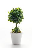 Fototapety Pot plant