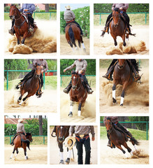 horses in reining competiton, collage