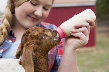 A girl bottle-feeding a baby goat.