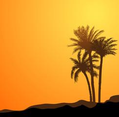 palm tree scenic