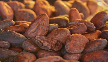 Kakao ziarno