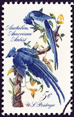 Columbia Jays by John James Audubon (USA 1967)