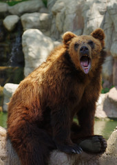 bear Kamchatka 5