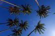 canvas print picture - Palmen