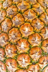 Scorza di ananas formata da  brattee fuse tra loro