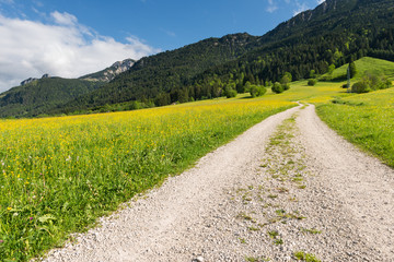gravel path in summer landscape with mountain and forest