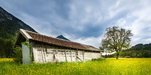 old wooden hut in green meadow with fresh tree and flowers