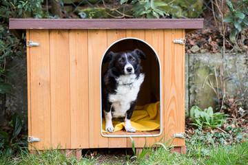 Hund in Hundehütte