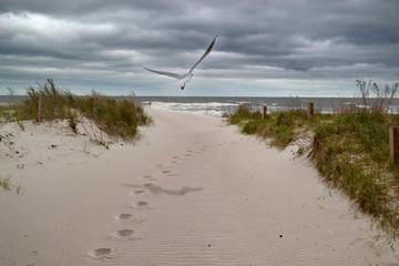 Spuren ans Meer bei Gewitter mit Möwe