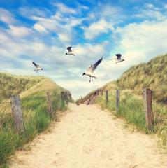 Möwen fliegen über den Strandzugang