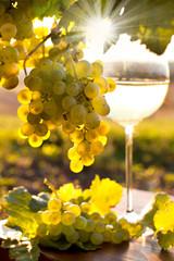 Wein am Weinstock im Abendlicht