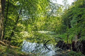 Naturschutzgebiet auf Rügen: Buchenwald und Naturteich :)