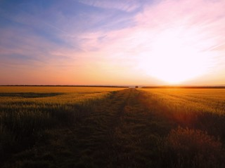 Vor Sonnenuntergang im Feld