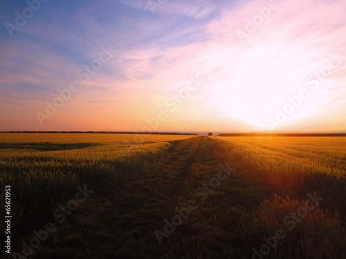 canvas print picture Vor Sonnenuntergang im Feld