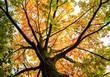 Baumkronen im Herbst :)