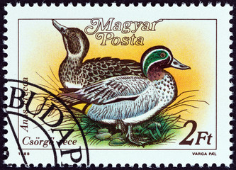 Green-winged Teal, Anas crecca (Hungary 1988)