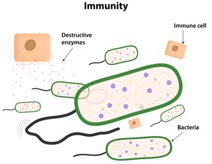 Immunity Labeled Diagram