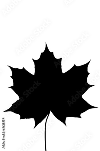 canvas print picture ahornblatt_schwarz_maple_leaf_black
