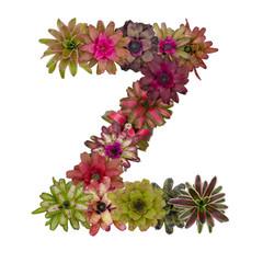 bromeliad flower letter