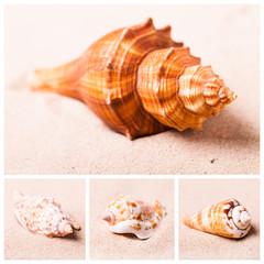 Muscheln im Sand - Collage