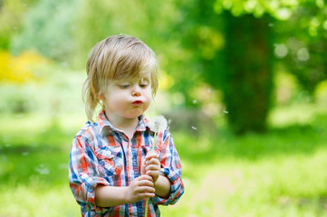 Funny kid blowing the seeds from a dandelion