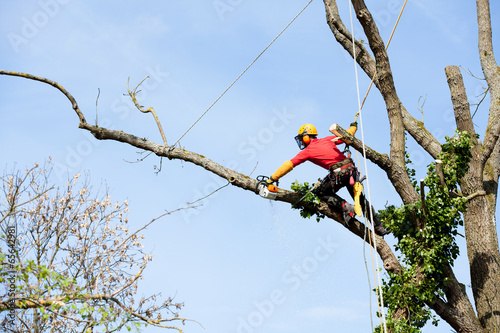 An arborist cutting a tree with a chainsaw - 65642981