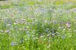 flower meadow - 65643562