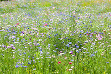 """Постер, картина, фотообои """"flower meadow"""""""