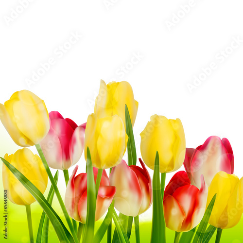 Beautiful tulips isolated on white. EPS 10
