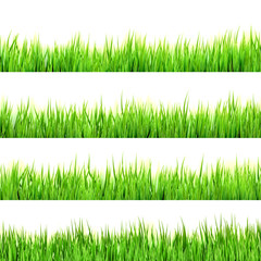Green grass isolated on white. EPS 10