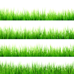 Fresh spring green grass isolated. EPS 10