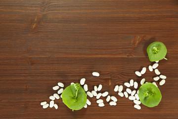Essensbrettchen mit Portulak