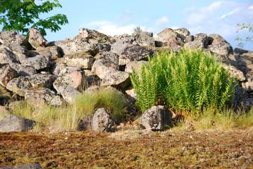 Bohus schwedischer Granit