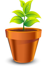 plant grow in brown pot