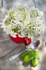Pot of jasmine