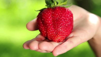 Hand holds fresh strawberries.