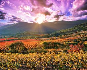 Coucher de soleil sur un vignoble en automne