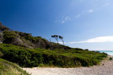 Traum - Strand mit Pinien