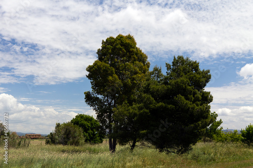 canvas print picture Landschaft in der Toskana
