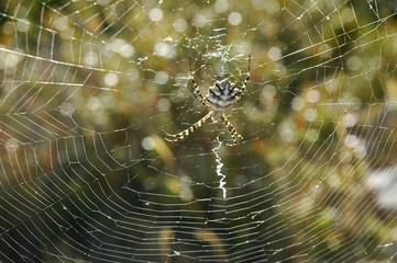 Araignée 3
