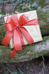 Gift ready for a surprise/Gift box on branch with moss in woods.