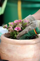 Gärtnerhandschuhe pflanzen Blume in Gartentopf