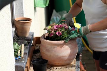 Frau pflanzt Sommerblume in alten Terrakottatopf