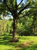 Parkbank im Wald