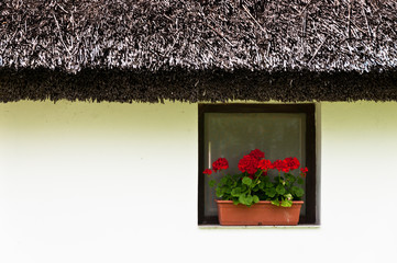 Rustical window on white wall with geranium