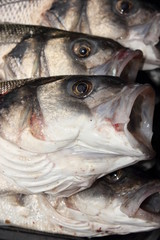 Fresh rod caught sea bass
