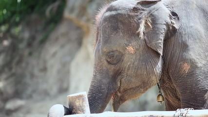 Close-up of a Cute Elephant