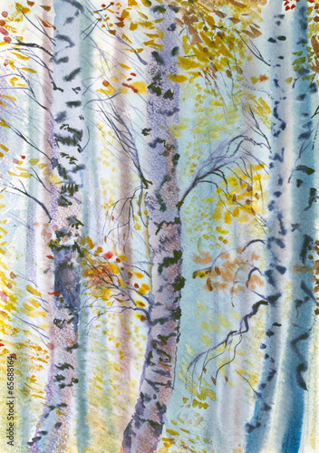 autumn birch - 65688164